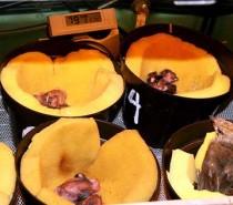 Inkubator untuk piyik yang baru menetas