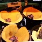 Piyikan cucakrawa dalam inkubator