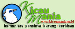 kicaumania