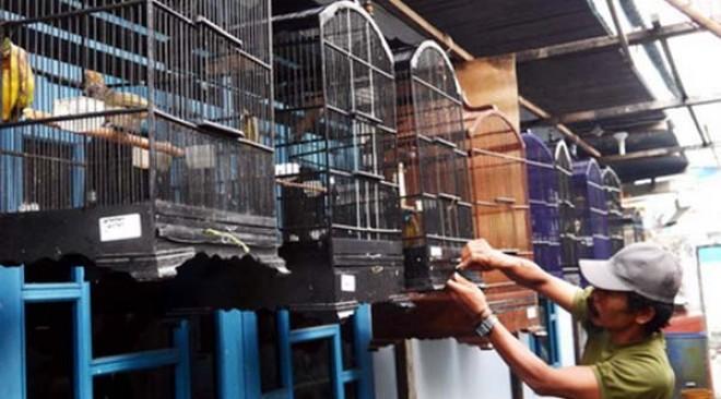 GRD Bird Farm hasilkan cucakrawa berkualitas